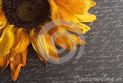 Sunflower on Script Written Background