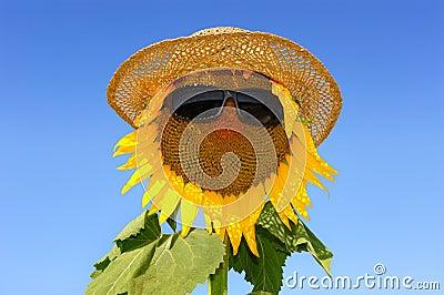 Sunflower-six