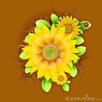 Sunflower from Top View