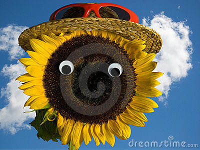 Sunflower wearing a hat