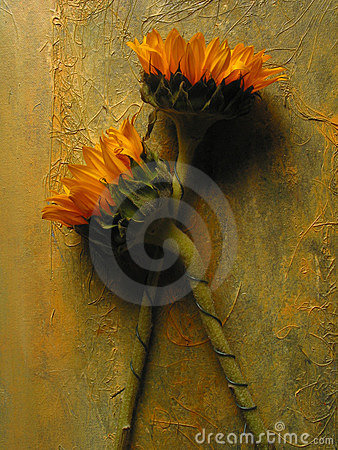 Free Sunflowers Stock Photography - 1282