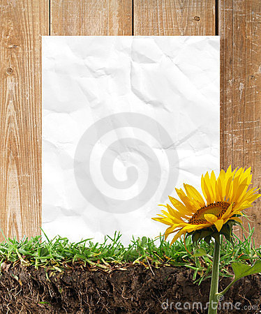Free Sunflowers And Paper Frame Royalty Free Stock Photography - 24125887