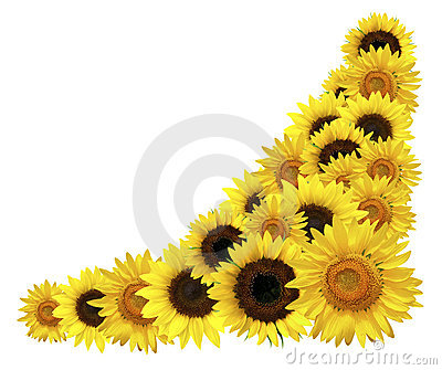 Sunflowers Corner Royalty Free Stock Photos - Image: 9803278