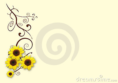 Sunflowers cream background