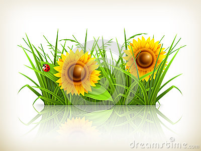Sunflowers in grass