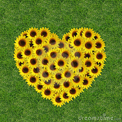 Free Sunflowers In A Heart Shape Stock Images - 7932144