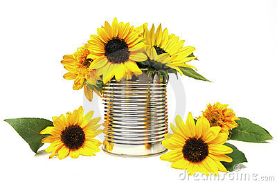 Sunflowers in recycling tin