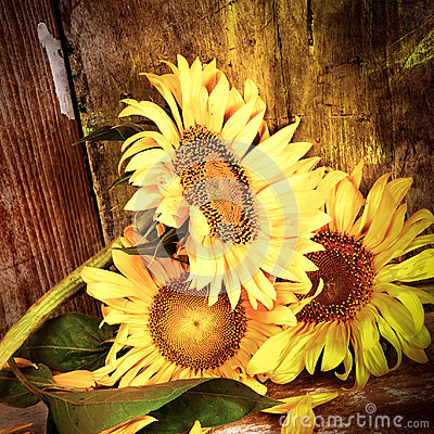 Free Sunflowers With A Grunge Rustic Wooden Background Royalty Free Stock Image - 29622296