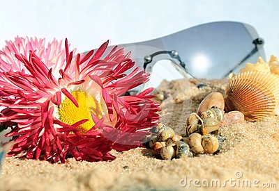 Sunglasses flowers and snails in the sand