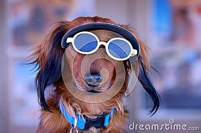 Sunglasses Puppy Dog