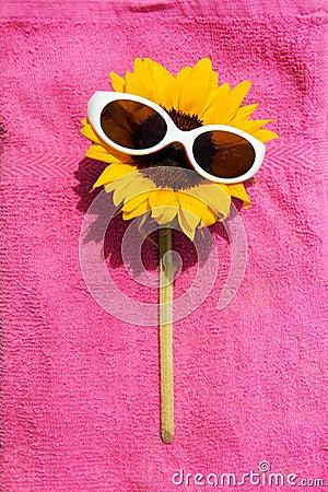 Sunglasses on Sunflower