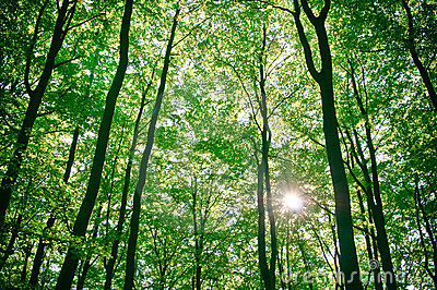 Sunlight being detectable in trees in forest