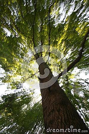 Sunlight through blurred tree