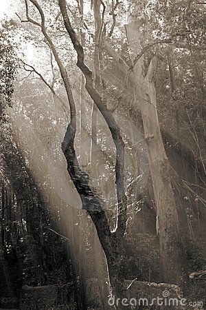 Sunlight entering the forest with sepia toning