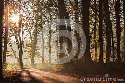 Sunlight falls on a forest road