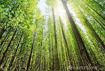 Sunlight in Forest