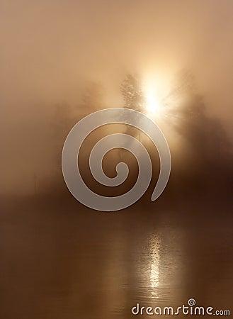 Sunlight mist trees