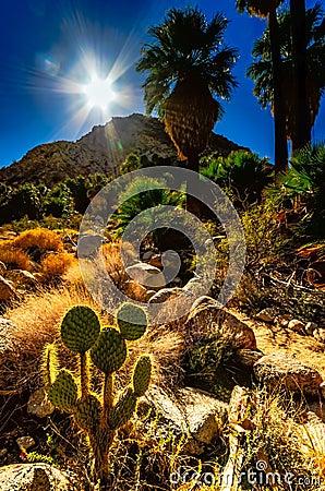 Free Sunlight On Desert Oasis - Joshua Tree National Park - CA Royalty Free Stock Photo - 93709195