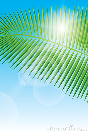 Sunlight and palm leaf