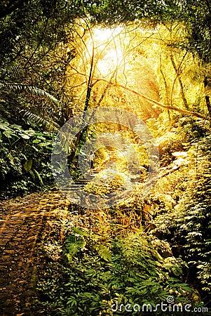 Sunlight in rain forest