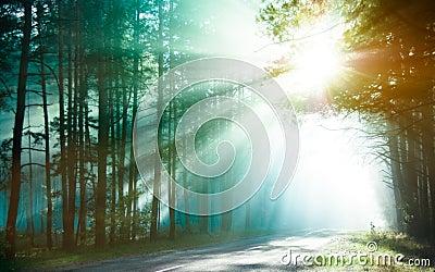 Sunlight rays