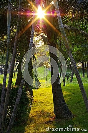 Free Sunlight Through Trees Royalty Free Stock Image - 3317436