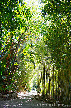 Sunlight in tropical garden. bamboo trees