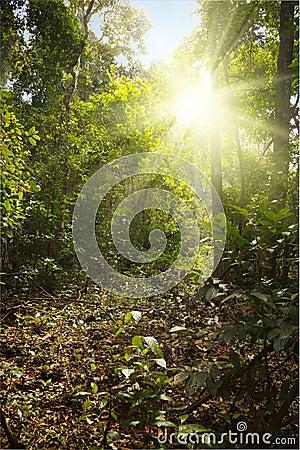 Sunlight in tropical jungle