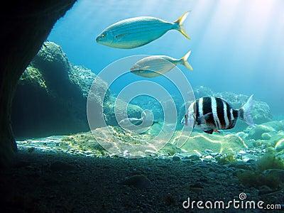 Sunlight undersea