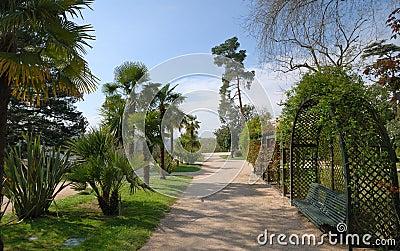 Sunlit alley in spring public garden.