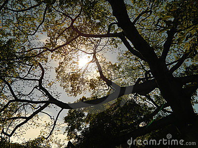 Sunlit Foliage