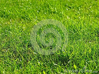Sunlit grass background