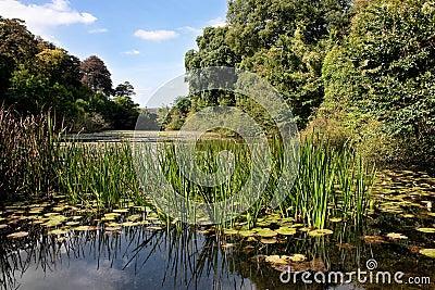 Sunlit Lush Green Lily Pond with Stone Bridge