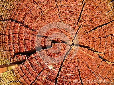 Sunlit reddish cross-section of a tree-trunk