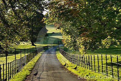 Sunlit Track Through Dallam Park