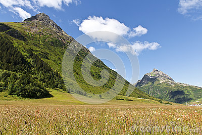 Sunny Alps Field