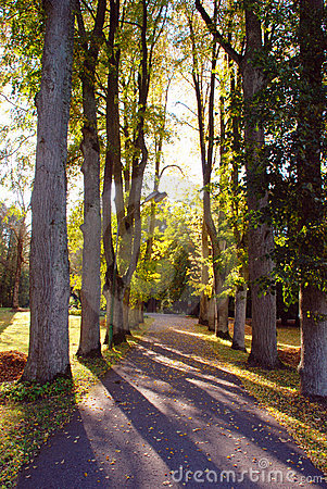 Sunny autumn alley