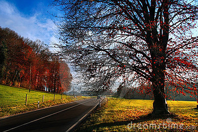 Sunny autumn road