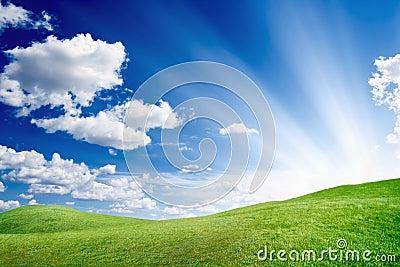 Sunny day, green field