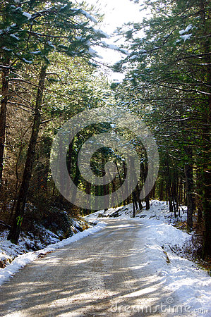 Free Sunny Forest Royalty Free Stock Photography - 61740667