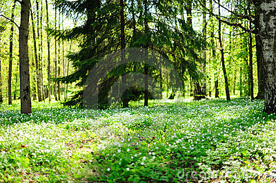 Sunny forest glade