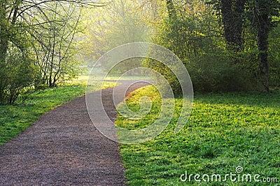 Sunny Park Path