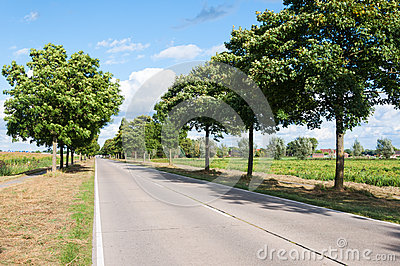 Sunny road in a Dutch rural area