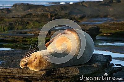 Sunny Sea Lion