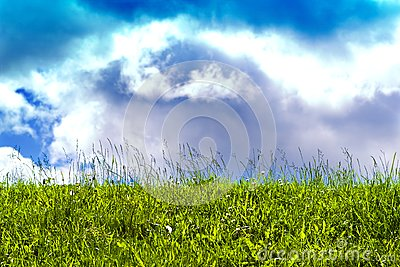 Sunny sky and poisonous grass