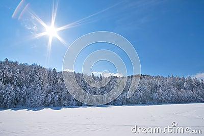 Sunny snow Landscape