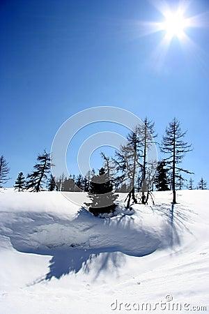 Sunny snowscape