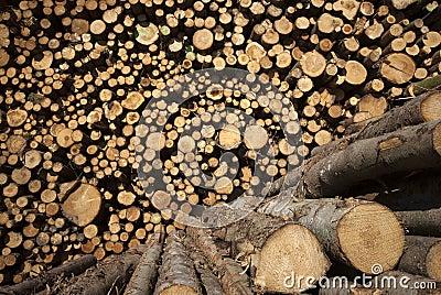 Sunny timber