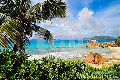 Sunny tropical beach