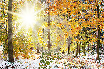 Sunny Winter Forest Scene Royalty Free Stock Photo Image